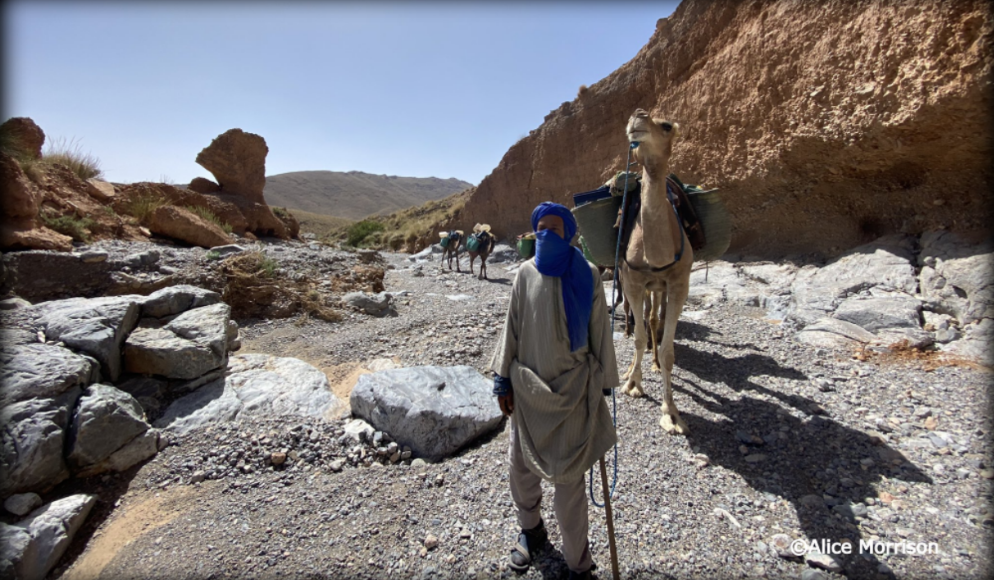 Moroccan Odyssey