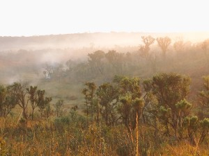 Morning view of team's campsite in Miombo Forest