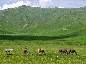 Kazakhstan's lush hills and grasslands stocked with local horses