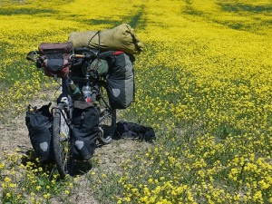 Emerging from the canyon to be greeted with a view of yellow flowers dotting the land