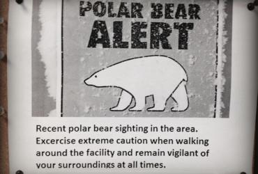 Arctic Gurkha, Polar Bear, Canada, Arctic